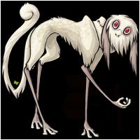 albino adult
