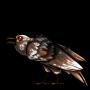 https://images.rescreatu.com/items/all/Ravencalico.png